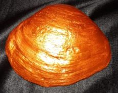 SMUDGE SHELL - Bronze Bottom
