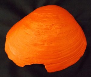 SMUDGE SHELL - Tangerine Bottom