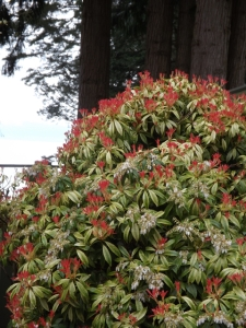 Pieris, healing through ceremony, michele fire-river heart