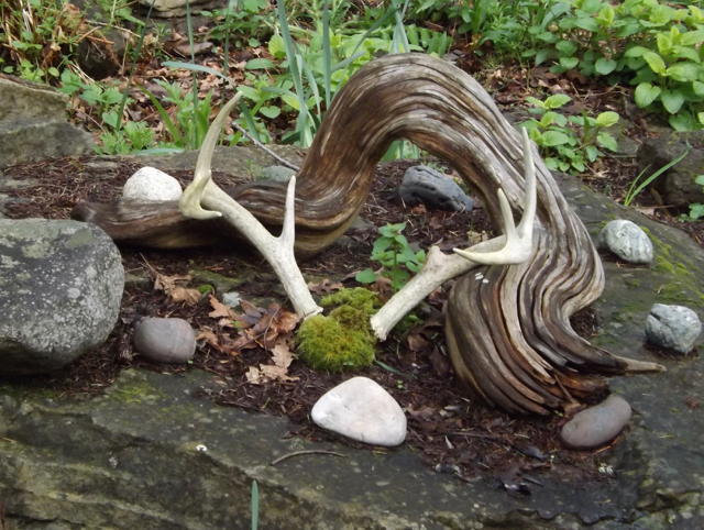 Sacred ancestors, deer antlers, medicine wheel, healing through ceremony, michele fire-river heart