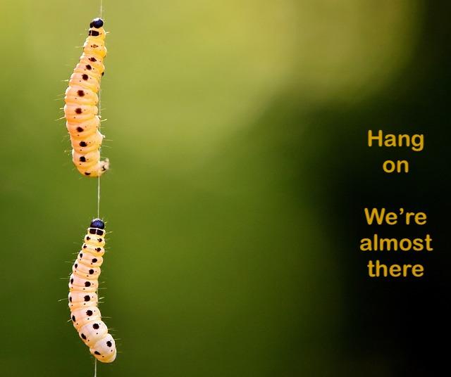 humane, humanity, paramedics, wax moth larva, alexas fotos, mayan, daykeeper, manik, evolution, growth, future, powerful, potential, accomplishment, healingthroughceremony.com, michele fire-River Heart