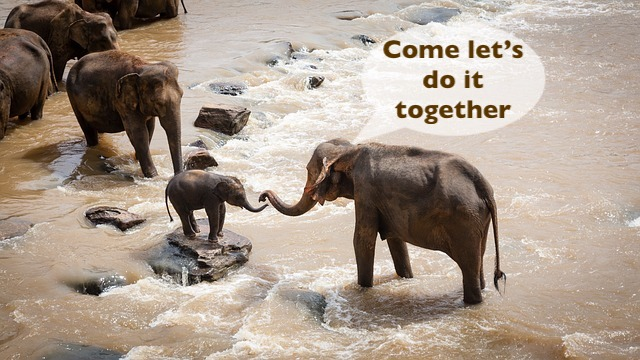 elephants, river, mayan, daykeeper, Kaban, mind, clarity, confusion, innovative, think, resolve, thought, healingthroughceremony.com, michele fire-river heart