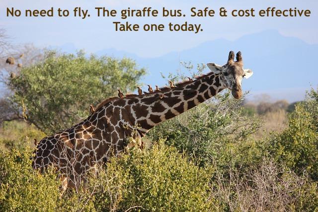humane, humanity, giraffe, mayan, daykeeper, kawak, transformation, sudden, HEALINGthroughCEREMONY.com. Michele Fire-River Heart