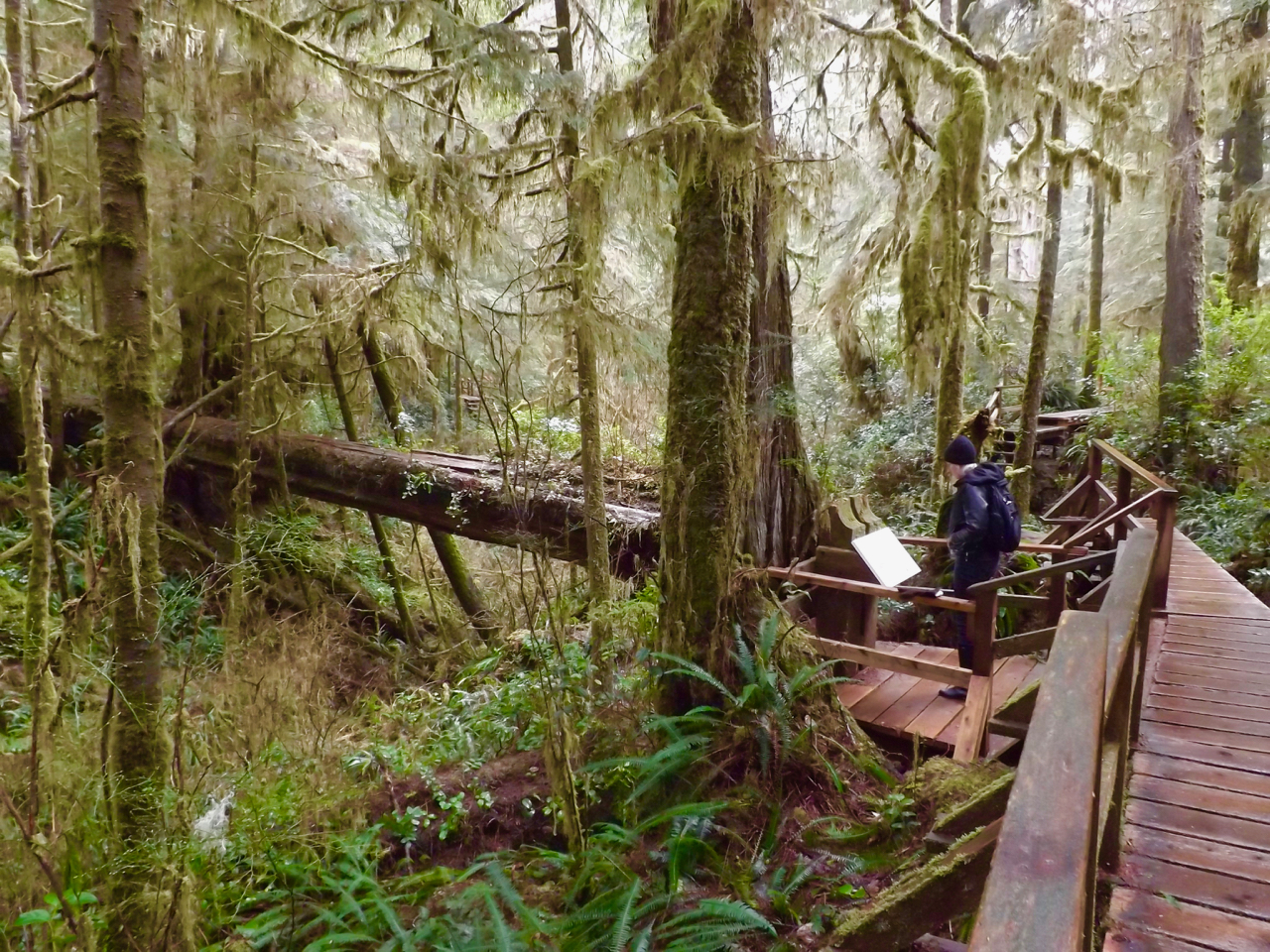 Forests, clayoquot sound, shamanism, mayan, daykeeper, ben, family, offspring, interdependent, responsibility, support, kindred, clan, kin, devotion, intimate, HEALINGthroughCEREMONY.com, Michele Fire-River Heart