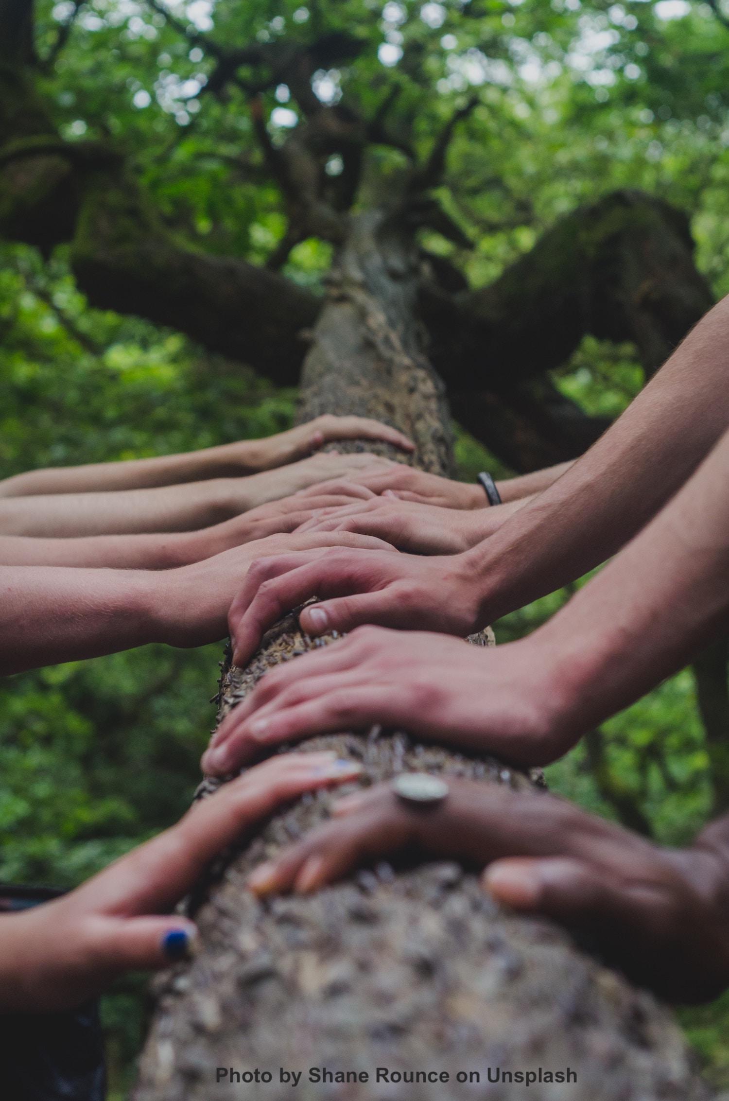 7 of wands, tarot, death, mayan, daykeeper, lamat, creativity, growth, reproduce, potential, healingthroughceremony.com, michele fire-river heart